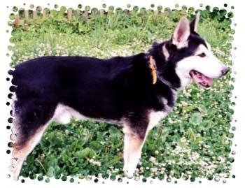 http://www.husky-site.ru/users/joy/foto1.jpg